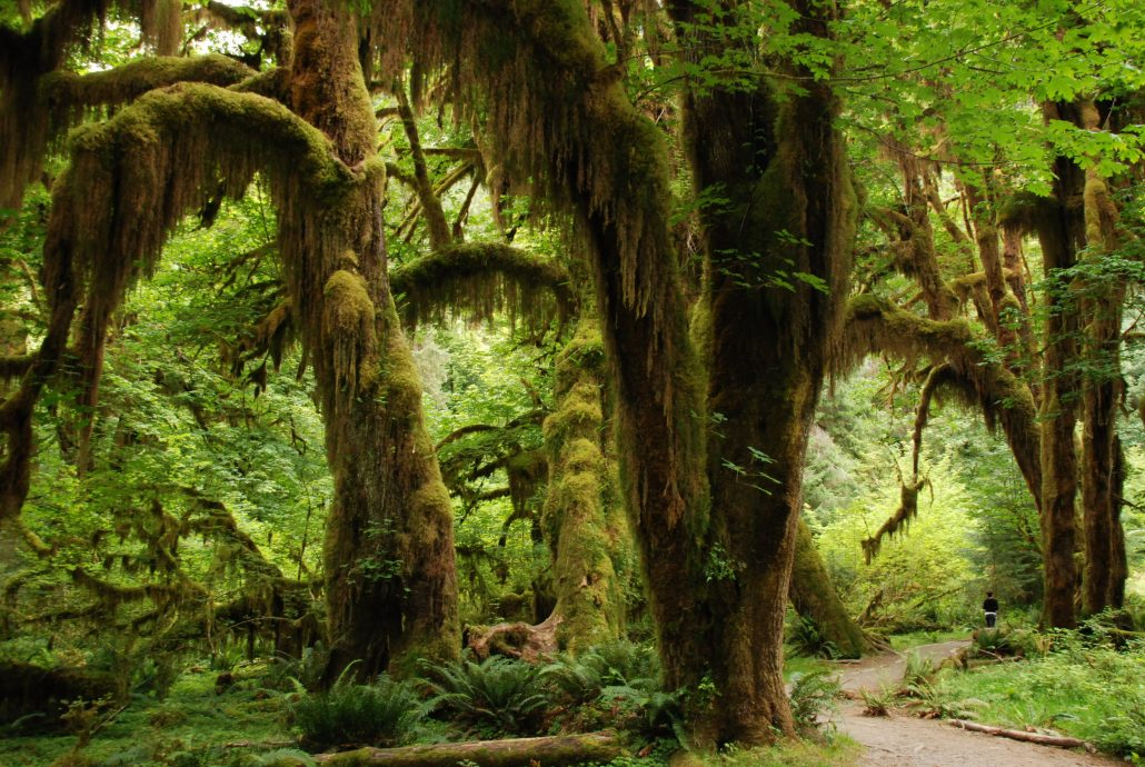 landscape-tree-nature-forest-wilderness-branch-629502-pxhere_com_-1030x690-1